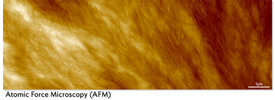 AFM image of spin coated biodegradable polymer (polycaprolactone).  (15 micron image) Jessi Gamboa (Yoon Group) and Brooke Beam